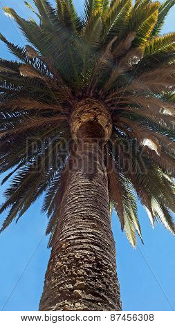 Summer Palm Tree