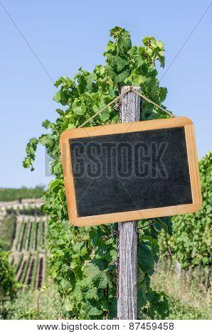 Blank Blackboard In The Vineyards