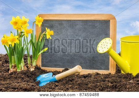 Empty Blackboard In The Flower Bed