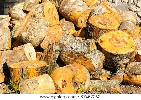 Pile of cut tree trunks