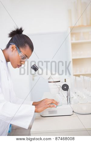 Concentrated scientist looking at petri dish in laboratory
