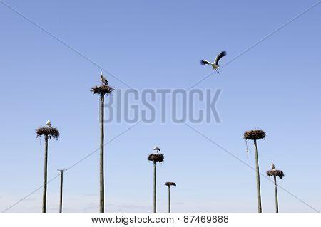 Storks Colony