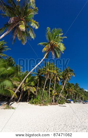 Coconut Palm Trees On Tropical Beach, Boracay