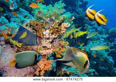 Tropical Fish and Coral Reef on Red Sea
