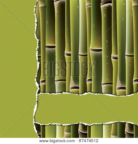 Bamboo Branches Under The Green Torn Paper.