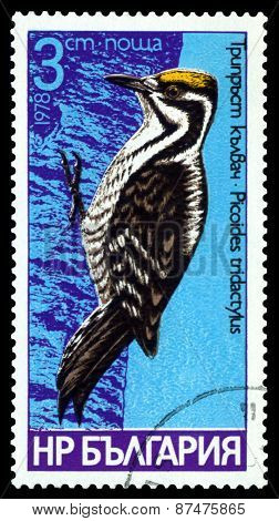 Vintage  Postage Stamp.  Bird, Tree - Toed.