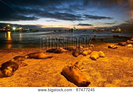 Beautiful sea lions sleeping along the port in San Cristobal island during sunset, Galapagos