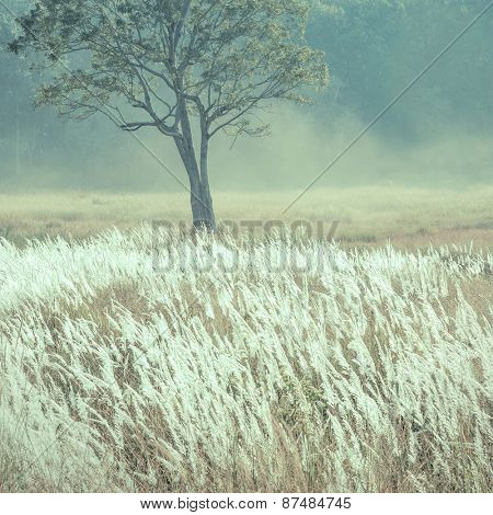 A wild grassland with a tree in the background. An abstract nature background.