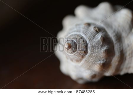 Sea Shell Macro Closeup