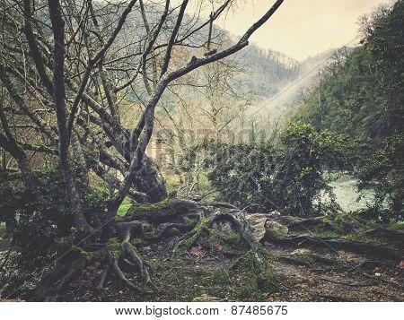 Caucasus Forest