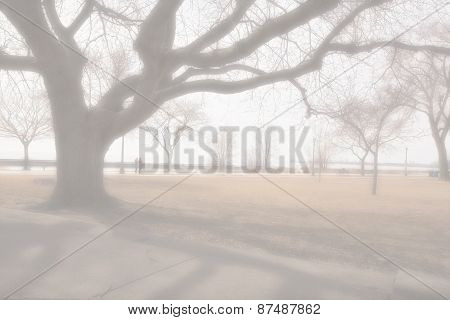 Foggy Weather At The Park