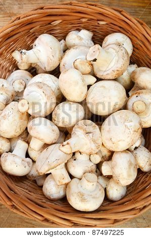 Raw white mushrooms champignons in a basket