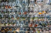 foto of goldfish  - goldfish market Mong Kok Kowloon in Hong Kong - JPG