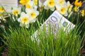 picture of narcissi  - Euro banknote growing in green grass - JPG
