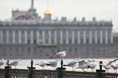 foto of flock seagulls  - Saint - JPG