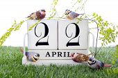 image of grass bird  - Earth Day April 22 Concept with vintage wood calendar and small birds and fern on grass background - JPG