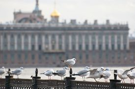 stock photo of flock seagulls  - Saint - JPG