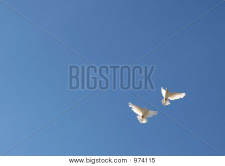 Two Doves In Flight