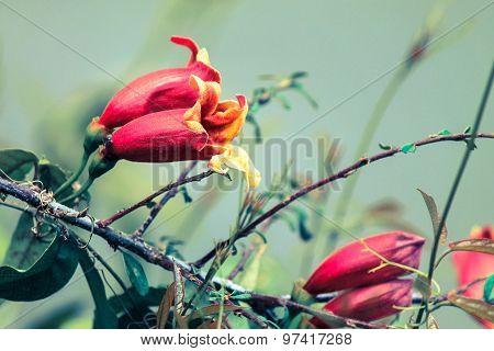 Wild Pink Flower Bells Close Up.