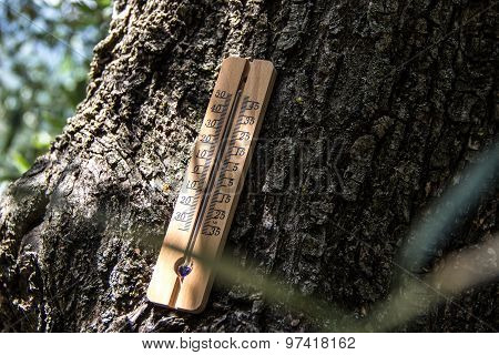 Thermometer In The Shade