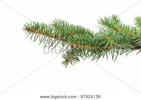 green fir twig for hanging something