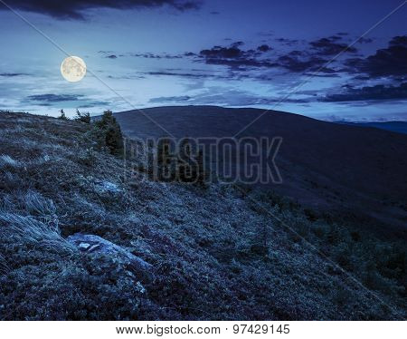 Stones And Conifer Trees On Hillside At Night