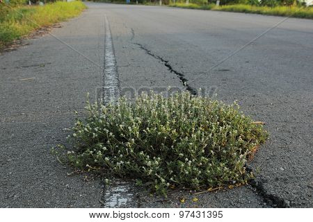 Grass growth on the road
