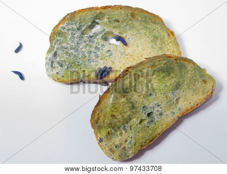 Moldy Bread With Worms