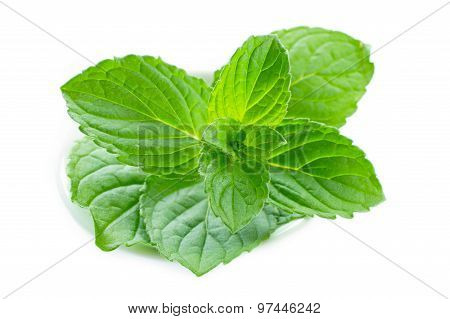 Fresh Mint Leaves In Porcelain Dish