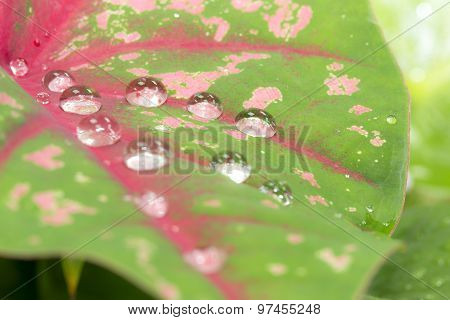 Water Drop On The Leaf