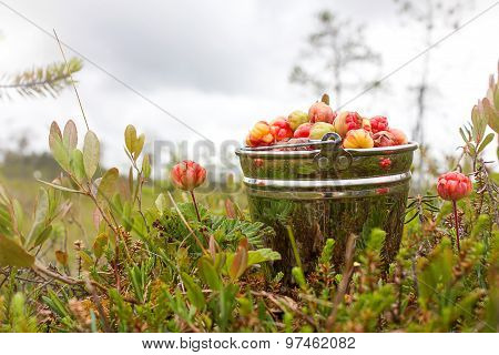 Cloudberry In The Bucket