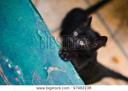 Black cute kitten