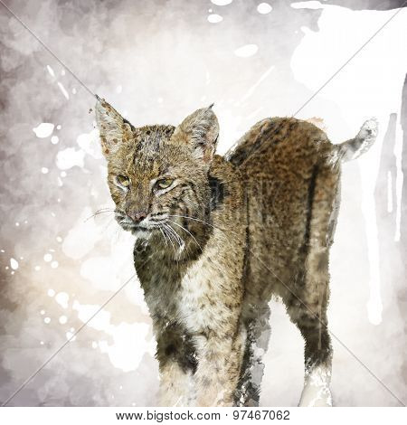 Digital Painting Of Bobcat Portrait