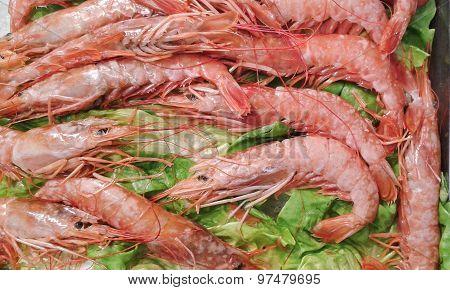 Shrimps On Salad