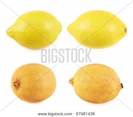 Fresh and old lemon fruits isolated