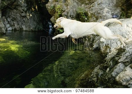dog jumping into clear green river pool