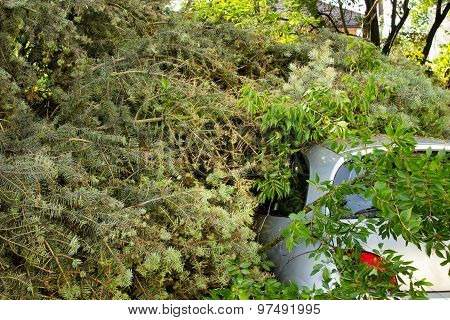 Poznan, Poland-july 19: Car Trapped Under Fallen Tree After Storm
