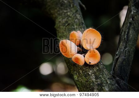 fungi cup on the branch