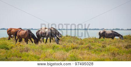 Horses Camargue Provence