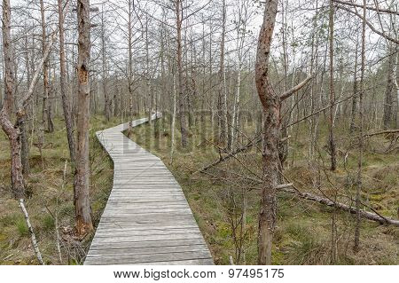 Wooden Bridge To The Swamp