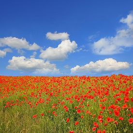 foto of quadrangles  - beautiful red poppy field blue sky with clouds and copy space quadrangle format - JPG