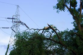picture of hurricane wind  - Damaged tree by hurricane wind after storm and high voltage energy pole - JPG