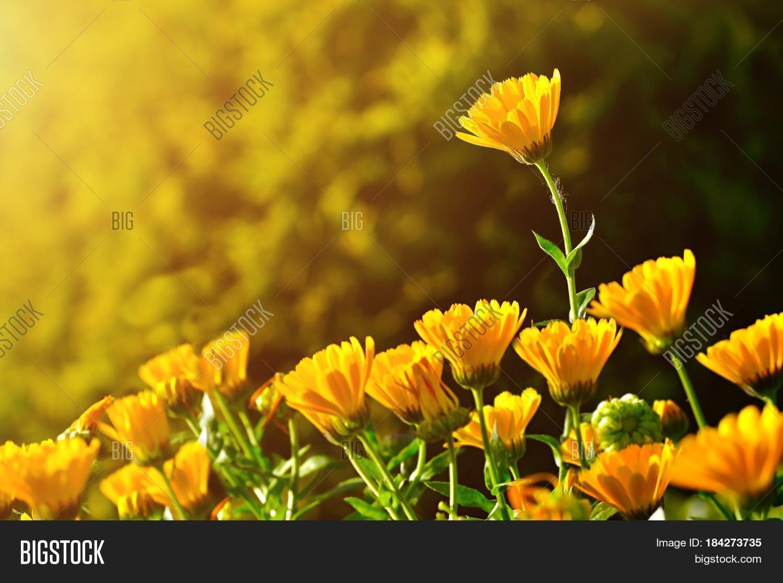 spring field flowers landscape image u0026 photo bigstock