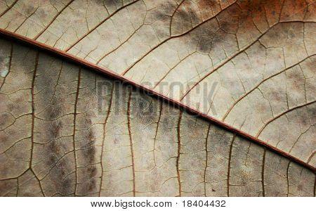macro of a brown feaf