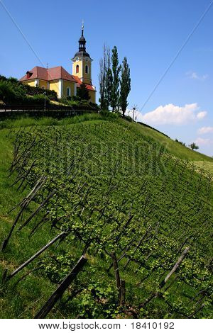 Vineyard on an Austrian countryside with a church in the background