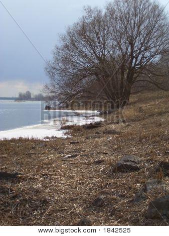 Tree Burst Over Winter River