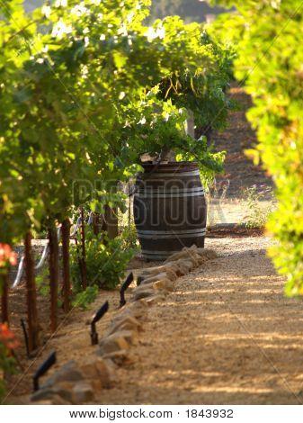 Summer Wine Barrel.