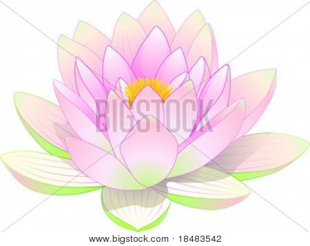 flower of lotus