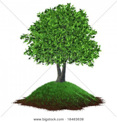 Illustration of a realistic 3D tree growing on a grassy hill