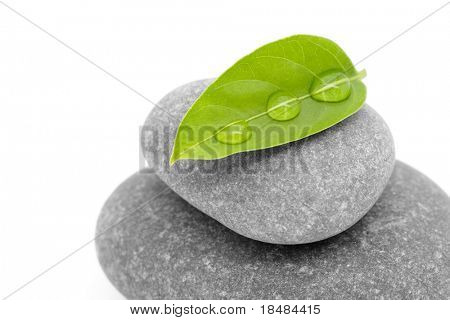 mineral and plant